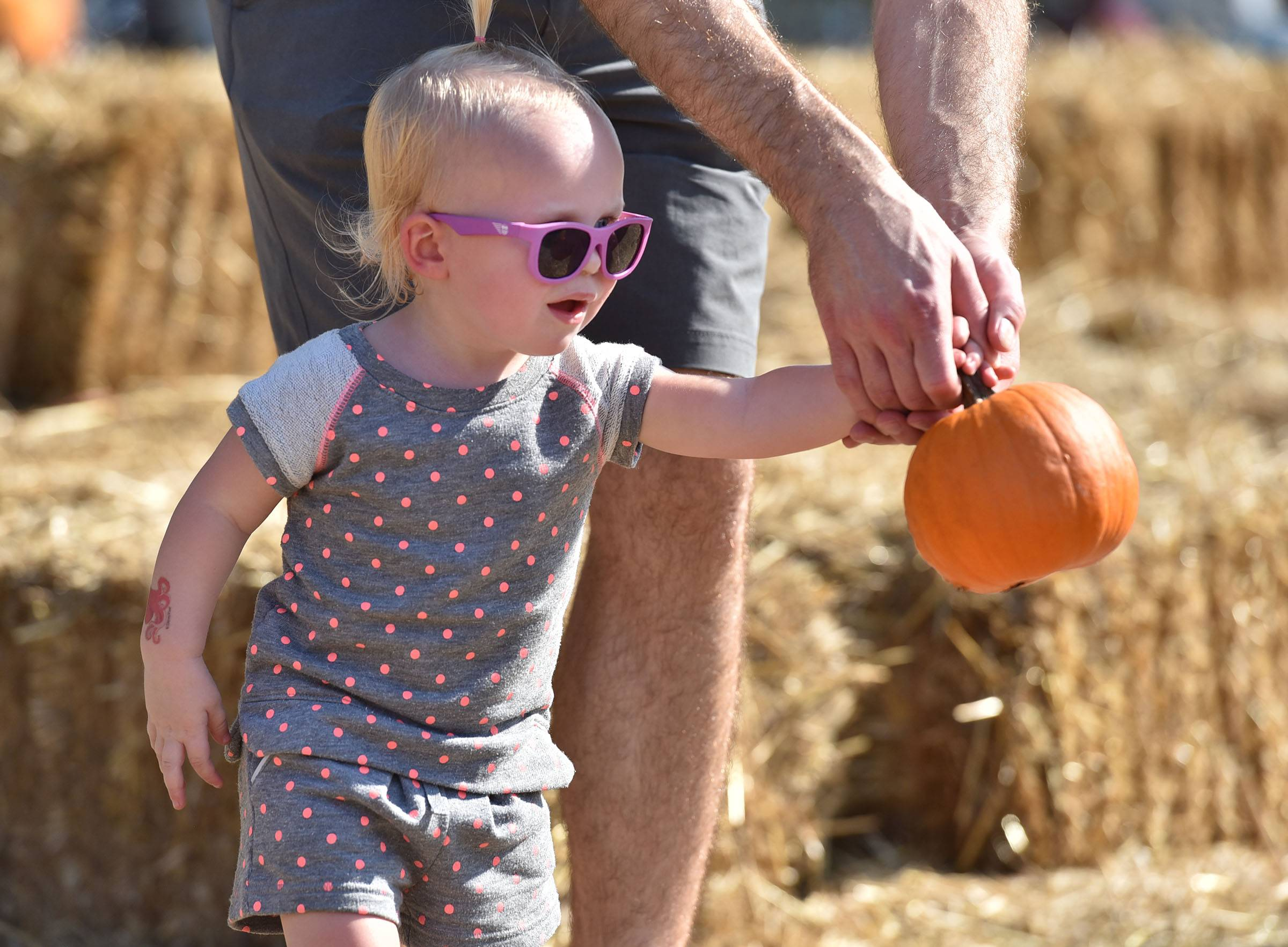 Sarah Dolder, 1, holds a small pumpkin with help from her dad Brian Dolder, of Huntley Saturday at the Huntley Fall Fest at Deicke Park. They were playing a bowling game in the kids activity area.